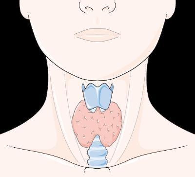sköldkörtel efter graviditet