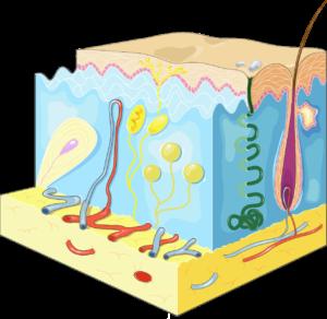 verruca vårtor hud hudförändringar